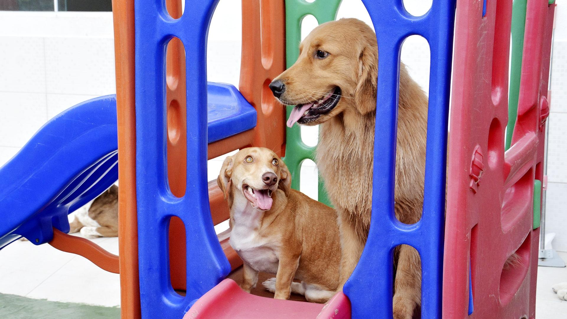 Dois cachorros felizes
